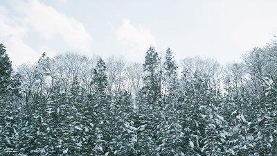 《小森林冬春篇》冬天就需要一部这样暖心暖胃的电影