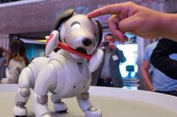 索尼机器狗Aibo正式